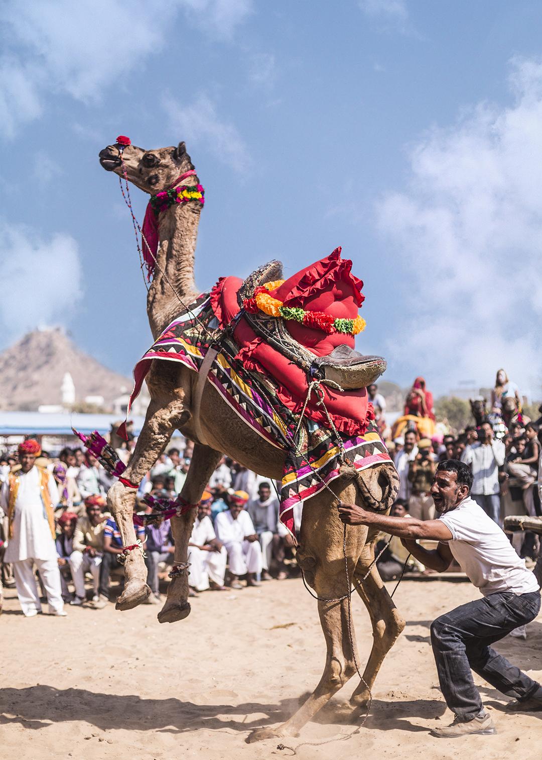 CAMEL DANCE 4