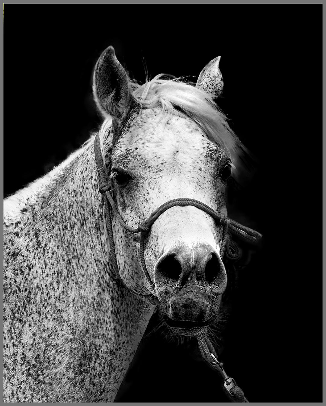 HORSE PROFILE BW