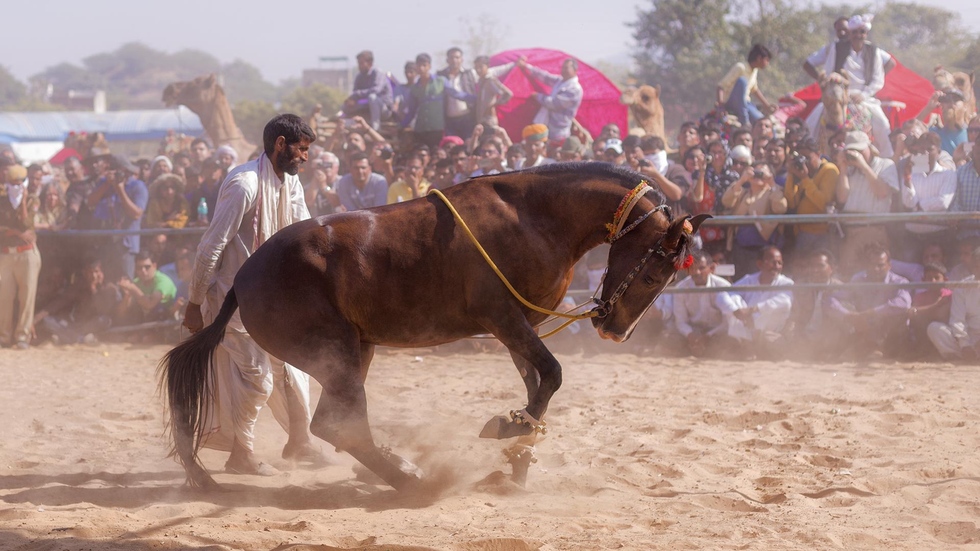 HORSE DANCE 05